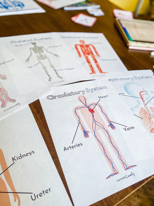 Human Body Systems Packet