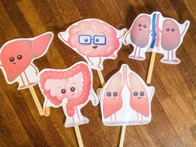 Organ Friends Printable Puppets